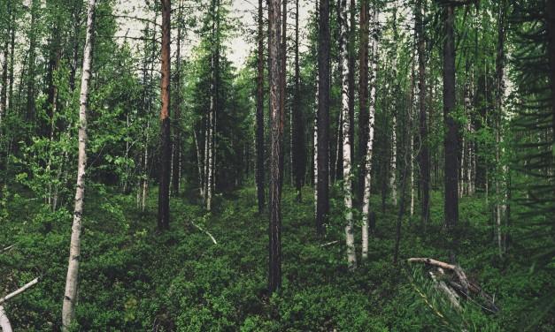 Dogsledding in Swedish Lapland